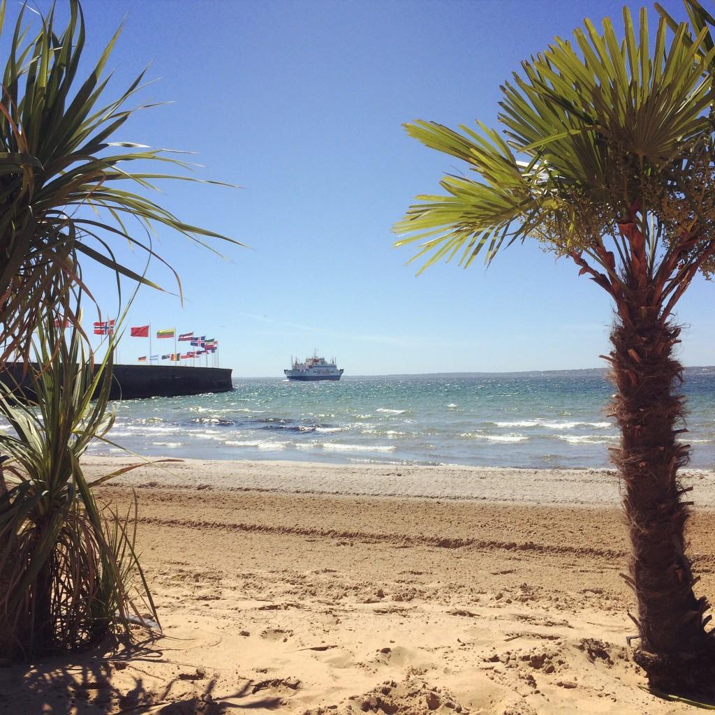Palmer? Ja visst! På lunchrasterna mellan jobb, hann jag ner till Tropical Beach vid sundet. Och kunde ligga och titta på danmarksfärjorna.